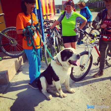 Пёс, который любит велосипеды