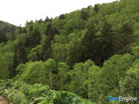 Сахалинский лес в начале лета