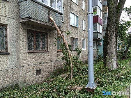 Деревья на домах после сильного ветра