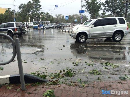 Начало циклона, деревья еще не сильно потрепало.